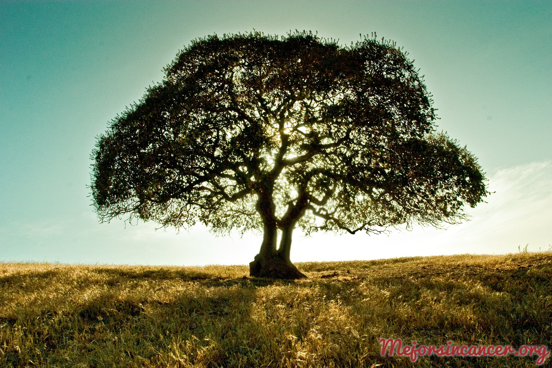 cancer_hereditario_genetica_arbol_familia