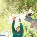 cancerígenos trabajo sol jardinero